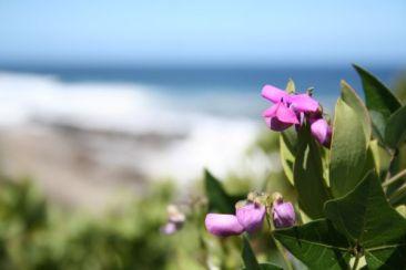 flower &beach