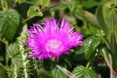 6flower