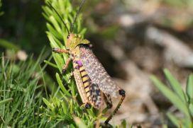 8grasshopper