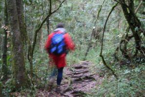 Hogsback Hike