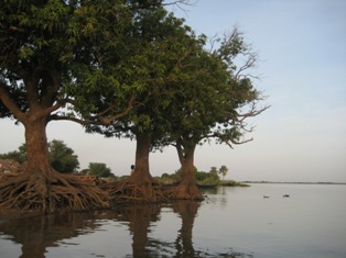 Trees on banks of Niger river