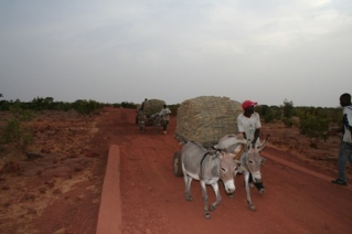 Bringing Millet from Farm