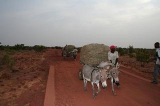 Bringing Millet fromFarm